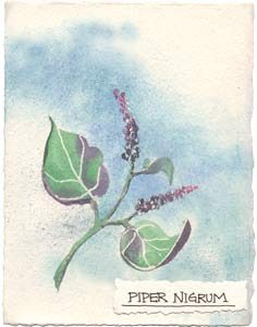 Watercolor painting of the pepper plant.