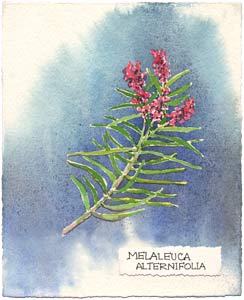 Watercolor Illustration of Tea Tree
